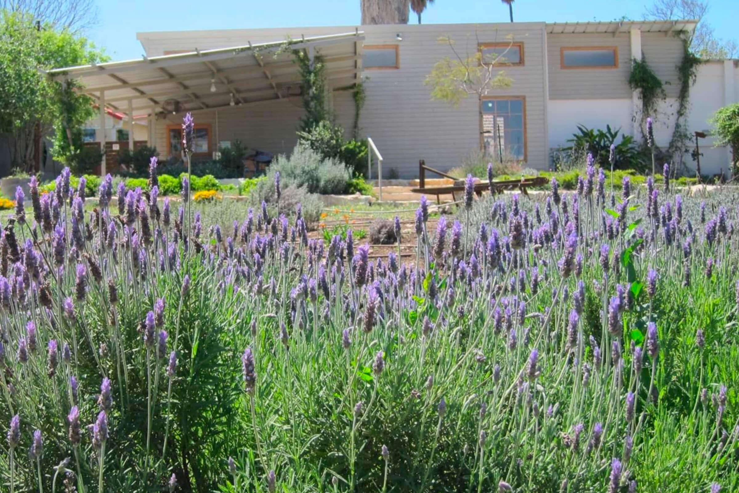 De botanische tuin van Lavido